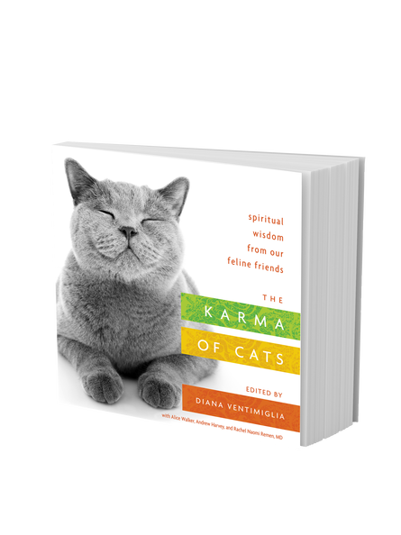 BK05628-Karma-of-Cats-Cover-3D.png